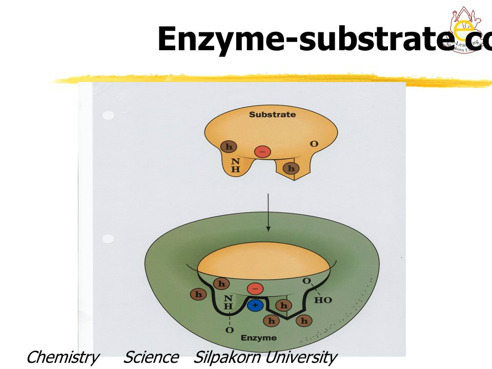 Enzyme-substrate complex