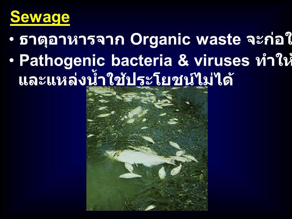 Sewage ธาตุอาหารจาก Organic waste จะก่อให้เกิด Eutrophication. Pathogenic bacteria & viruses ทำให้อาหารทะเลปนเปื้อน.