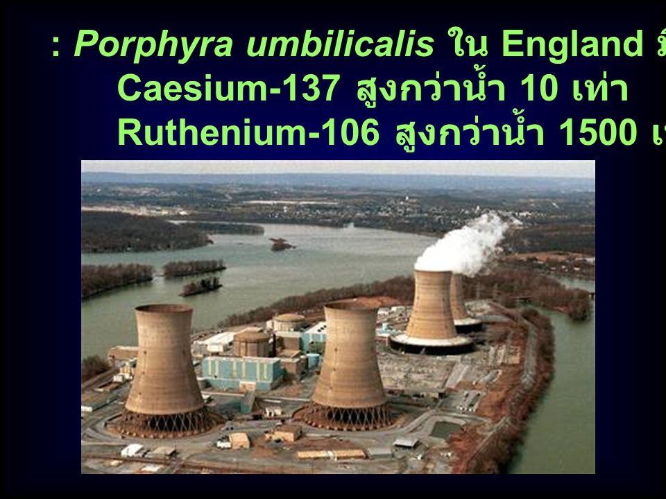 : Porphyra umbilicalis ใน England มีความเข้มข้นของ