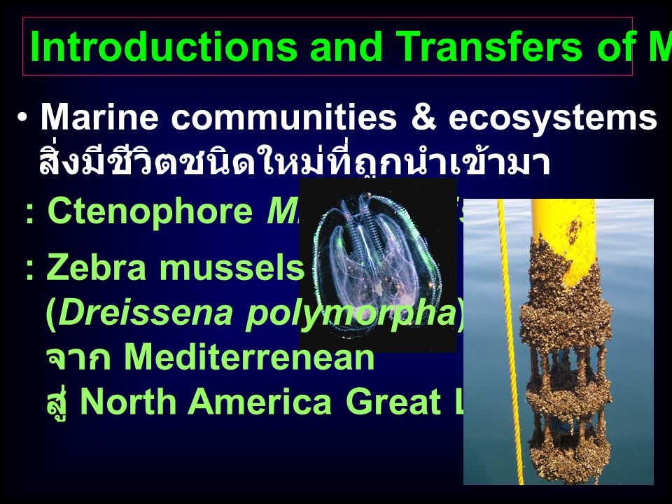 Introductions and Transfers of Marine Organisms