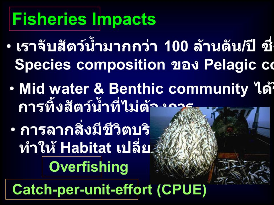 Fisheries Impacts เราจับสัตว์น้ำมากกว่า 100 ล้านตัน/ปี ซึ่งส่งผลกระทบต่อ. Species composition ของ Pelagic communities.