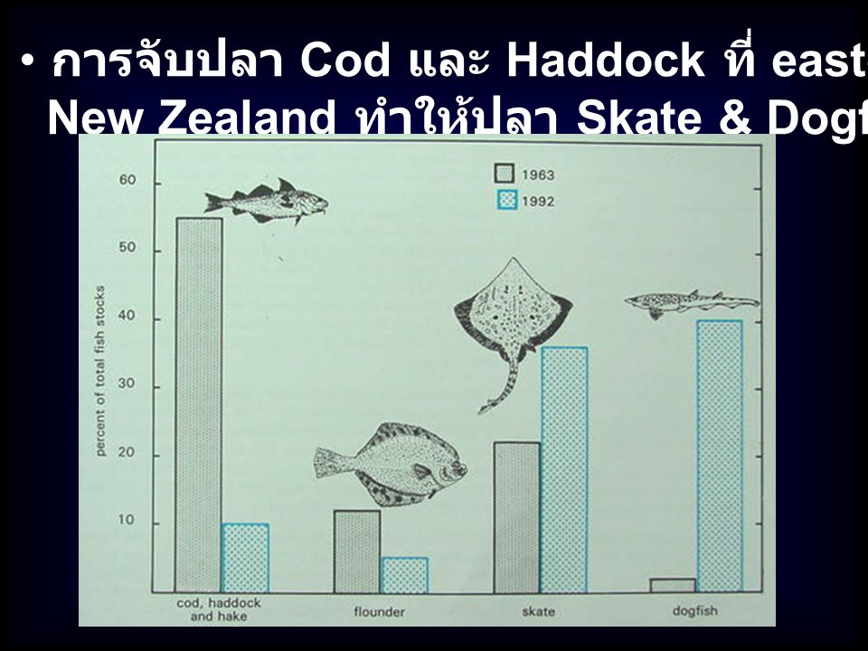 การจับปลา Cod และ Haddock ที่ eastern Canada &