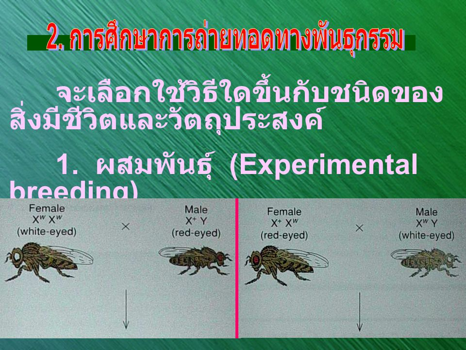 2. การศึกษาการถ่ายทอดทางพันธุกรรม