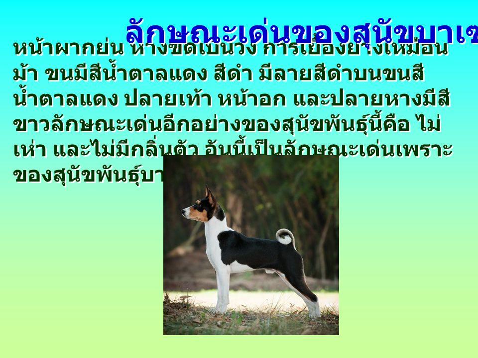 ลักษณะเด่นของสุนัขบาเซนจิ