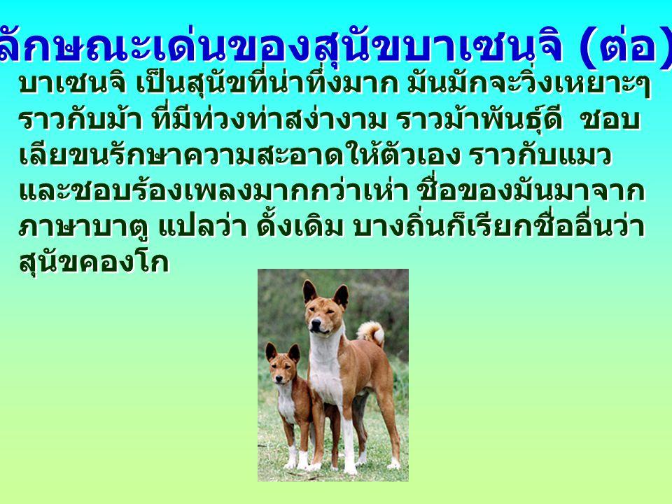ลักษณะเด่นของสุนัขบาเซนจิ (ต่อ)