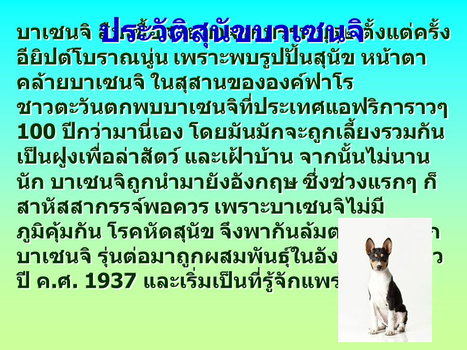 ประวัติสุนัขบาเซนจิ