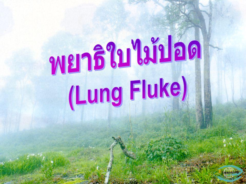 พยาธิใบไม้ปอด (Lung Fluke)