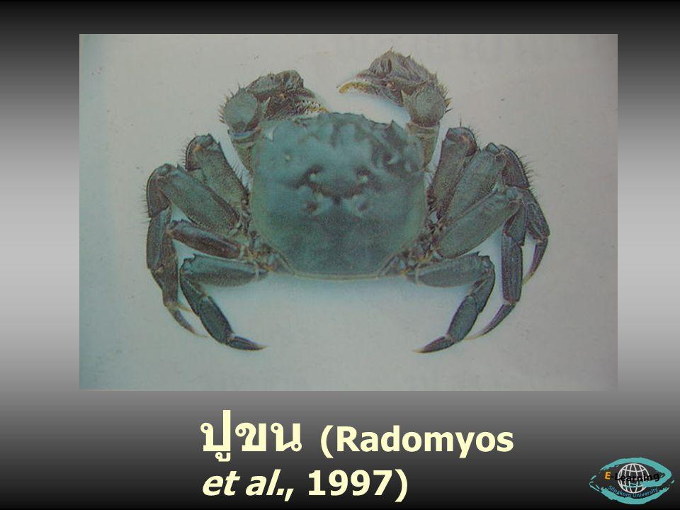 ปูขน (Radomyos et al., 1997)