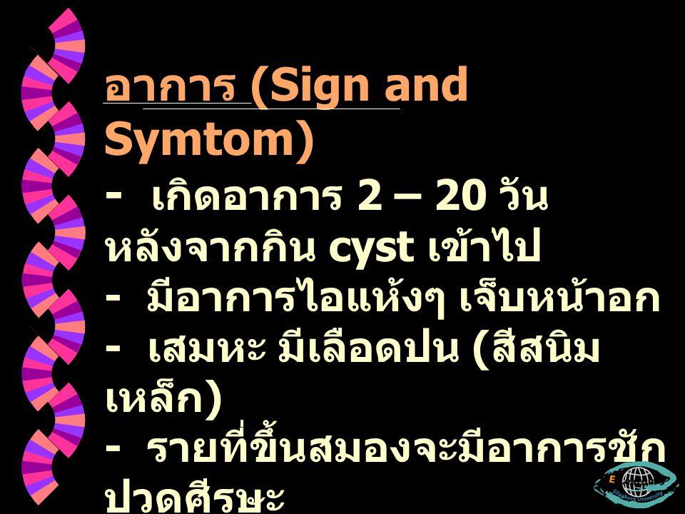 อาการ (Sign and Symtom) - เกิดอาการ 2 – 20 วัน หลังจากกิน cyst เข้าไป