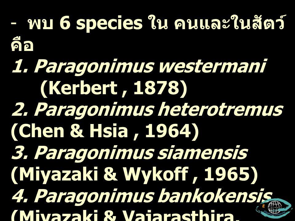พบ 6 species ใน คนและในสัตว์ คือ