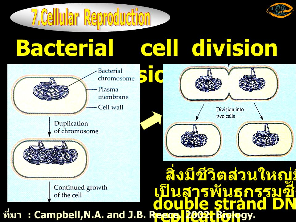 7.Cellular Reproduction