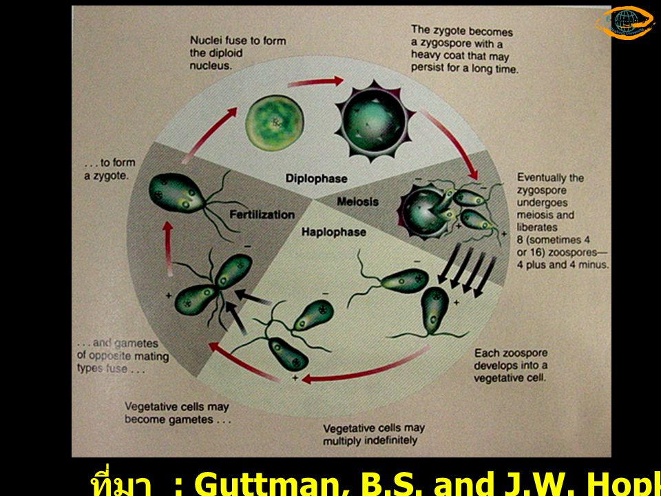 ที่มา : Guttman, B.S. and J.W. Hopkins. 1999. Biology