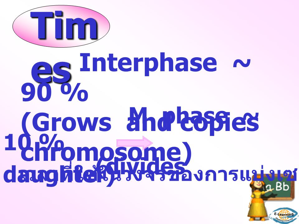 Times Interphase ~ 90 % (Grows and copies chromosome) M phase ~ 10 %