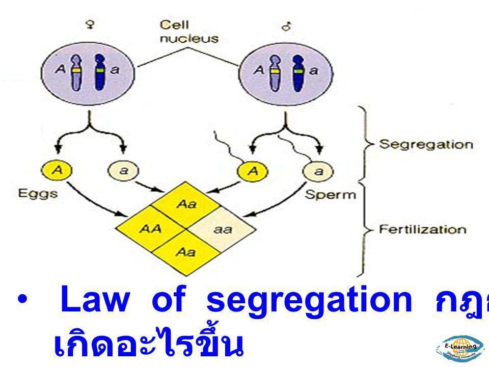 Law of segregation กฎการแยกตัวของยีน