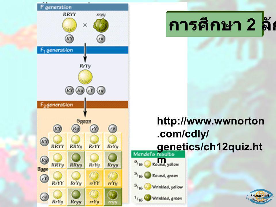 การศึกษา 2 ลักษณะ http://www.wwnorton.com/cdly/ genetics/ch12quiz.htm