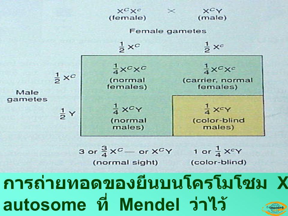 การถ่ายทอดของยีนบนโครโมโซม X จะแตกต่างจากยีนบน