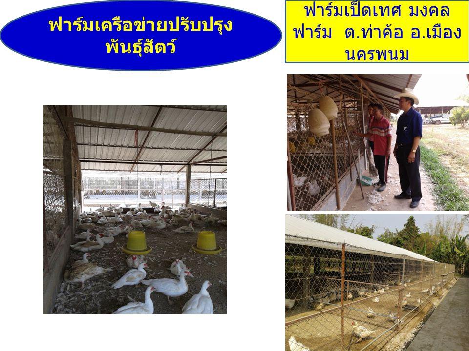 ฟาร์มเครือข่ายปรับปรุงพันธุ์สัตว์