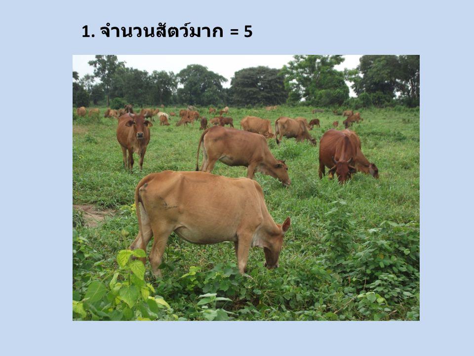 1. จำนวนสัตว์มาก = 5
