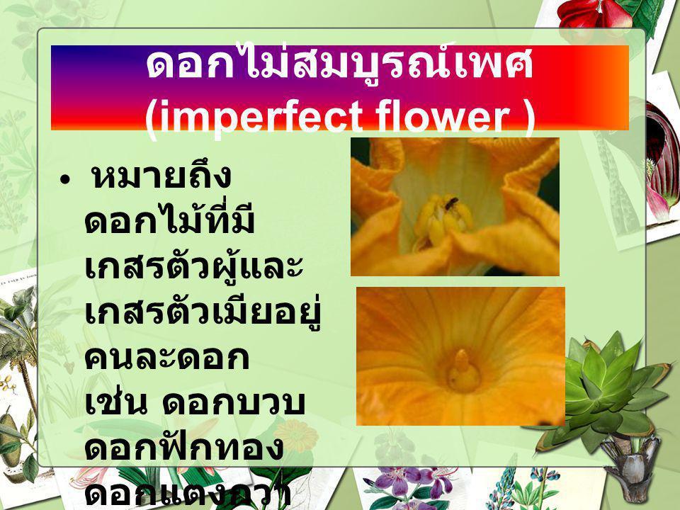 ดอกไม่สมบูรณ์เพศ (imperfect flower )