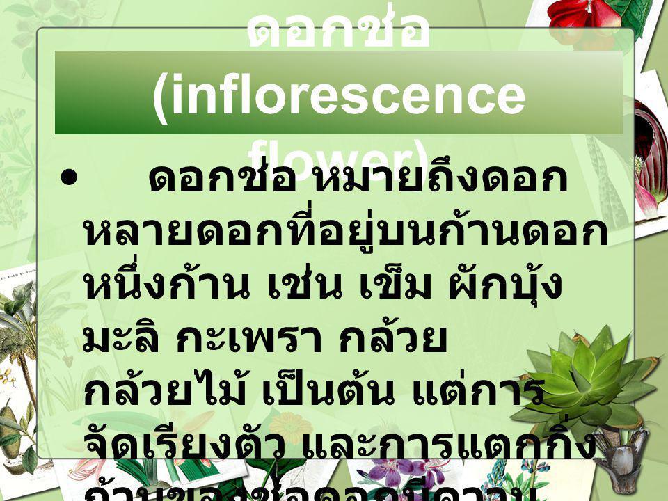 ดอกช่อ(inflorescence flower)