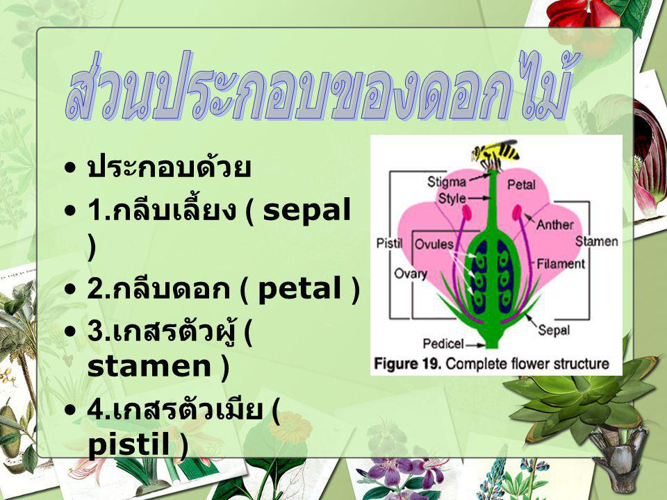 ส่วนประกอบของดอกไม้ ประกอบด้วย 1.กลีบเลี้ยง ( sepal )