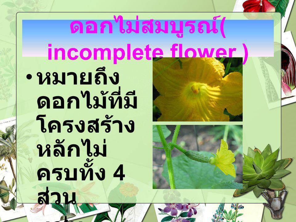 ดอกไม่สมบูรณ์( incomplete flower )