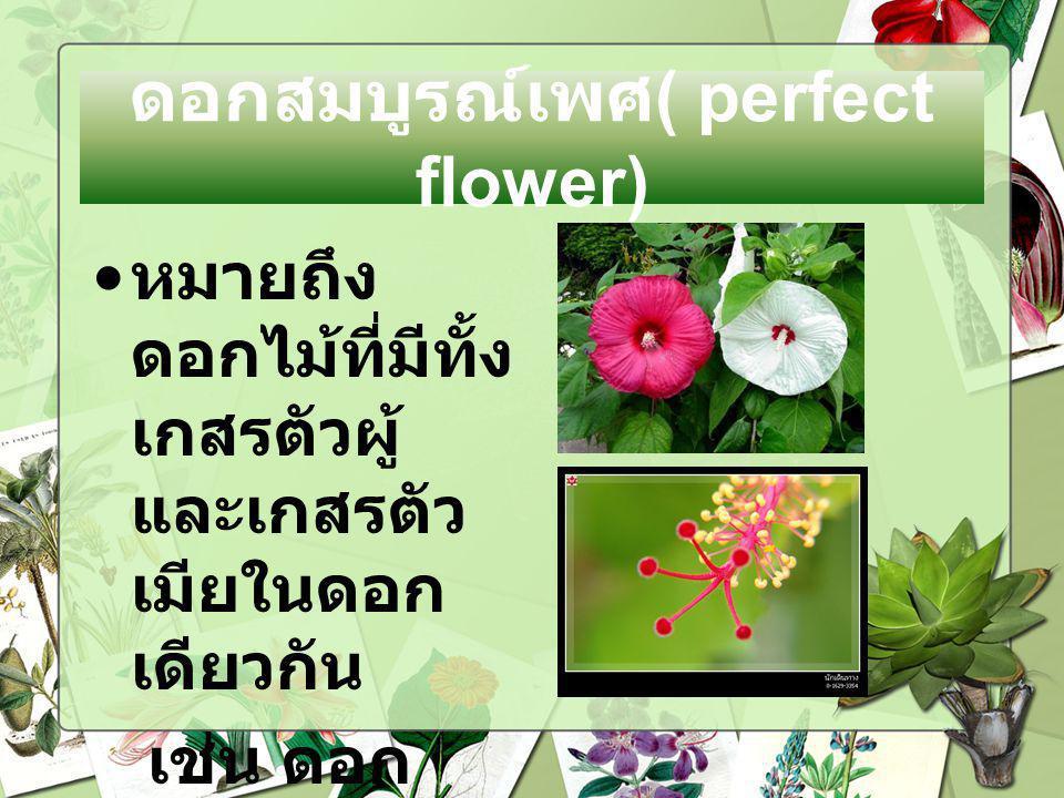 ดอกสมบูรณ์เพศ( perfect flower)