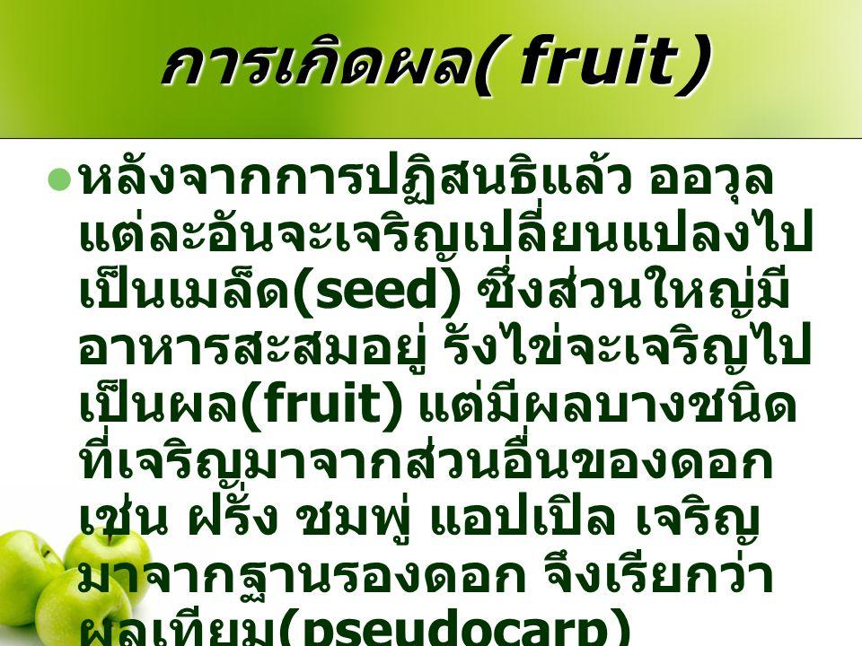 การเกิดผล( fruit)