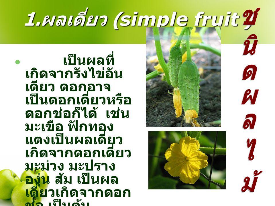 1.ผลเดี่ยว (simple fruit )