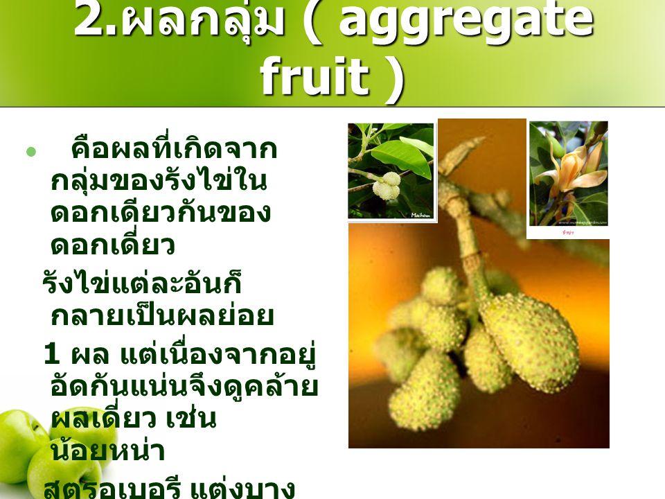 2.ผลกลุ่ม ( aggregate fruit )