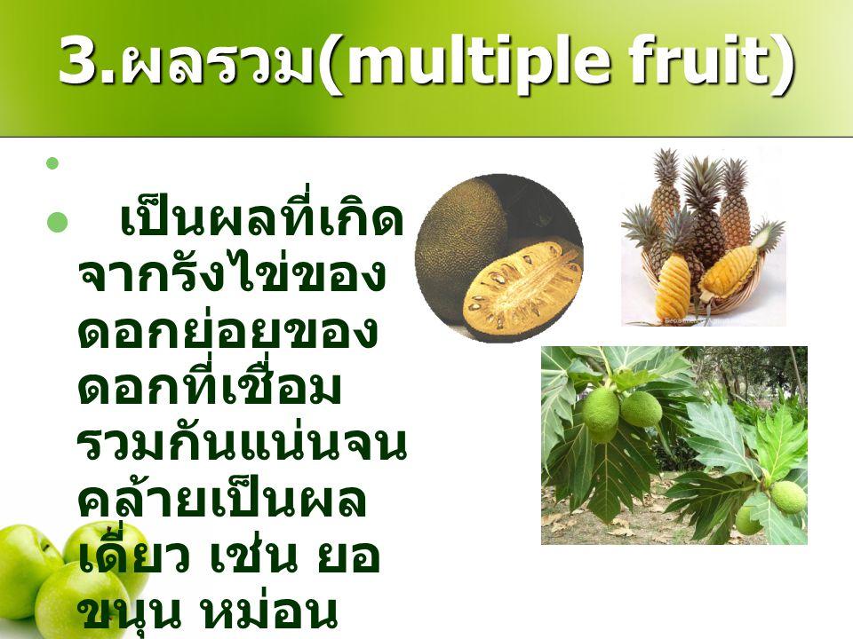 3.ผลรวม(multiple fruit)