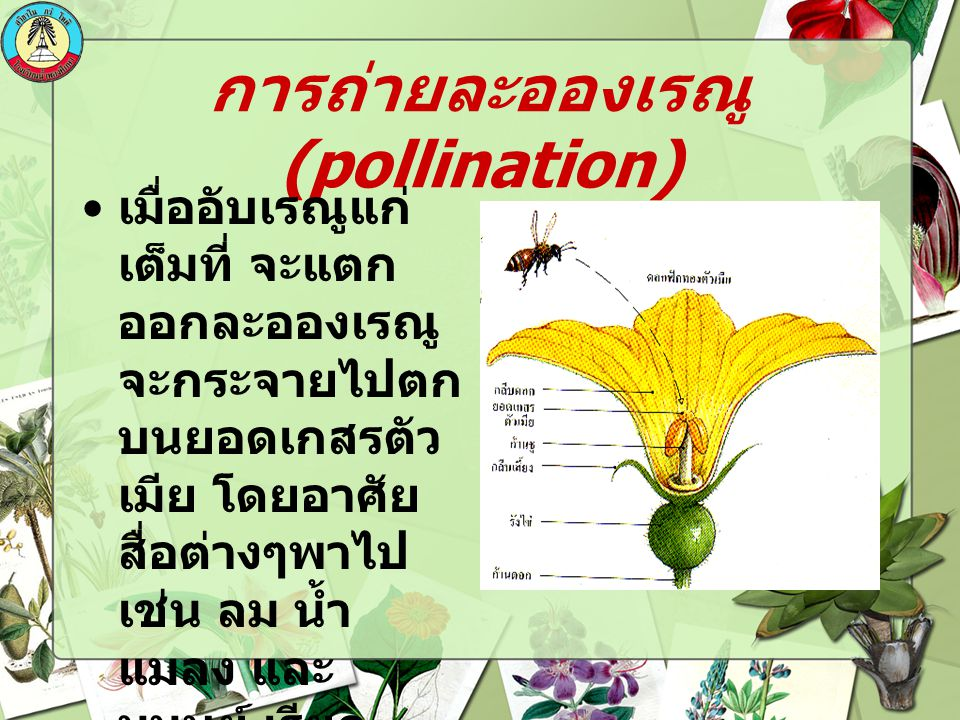การถ่ายละอองเรณู(pollination)