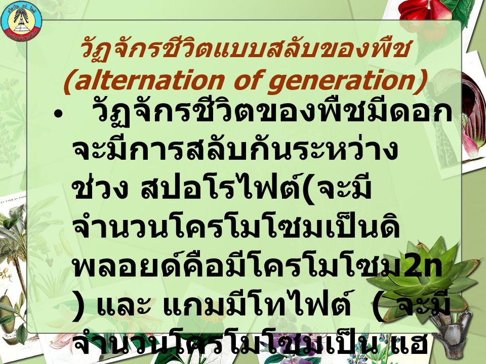 วัฏจักรชีวิตแบบสลับของพืช(alternation of generation)