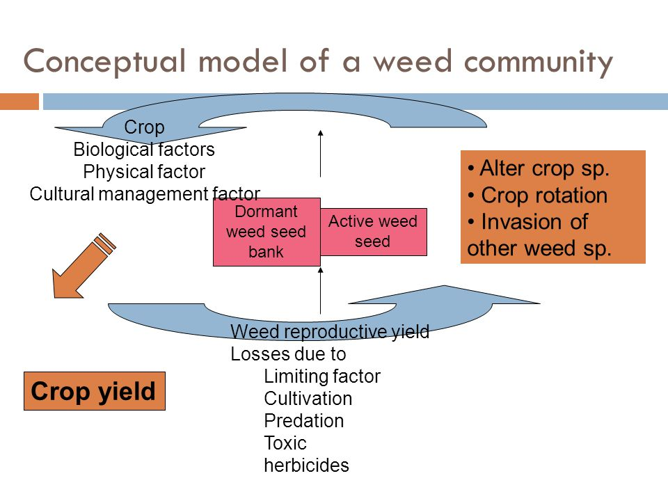 Conceptual model of a weed community