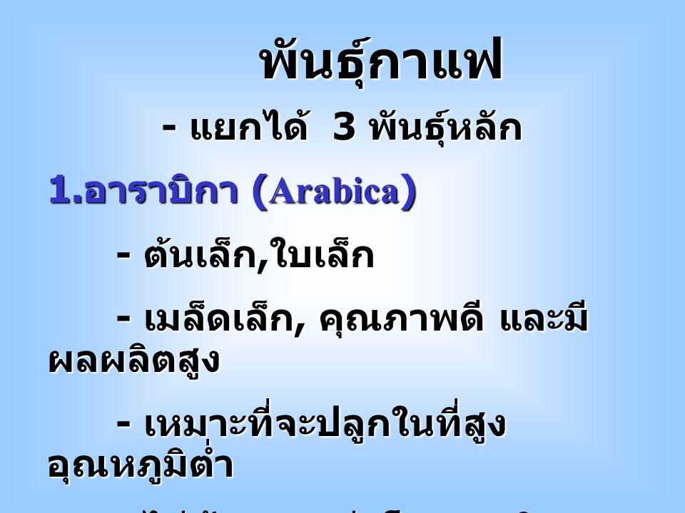 พันธุ์กาแฟ - แยกได้ 3 พันธุ์หลัก 1.อาราบิกา (Arabica) - ต้นเล็ก,ใบเล็ก