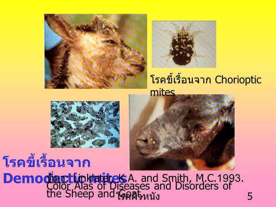 โรคขี้เรื้อนจาก Demodectic mites