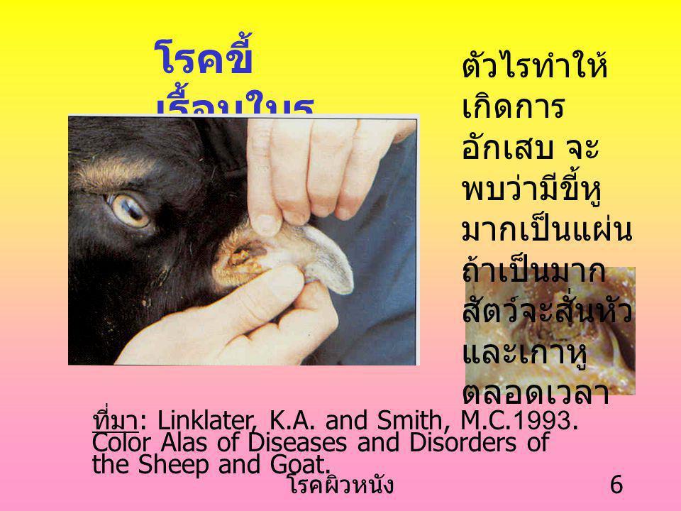 โรคขี้เรื้อนในรูหู ตัวไรทำให้เกิดการอักเสบ จะพบว่ามีขี้หูมากเป็นแผ่น ถ้าเป็นมากสัตว์จะสั่นหัวและเกาหูตลอดเวลา.