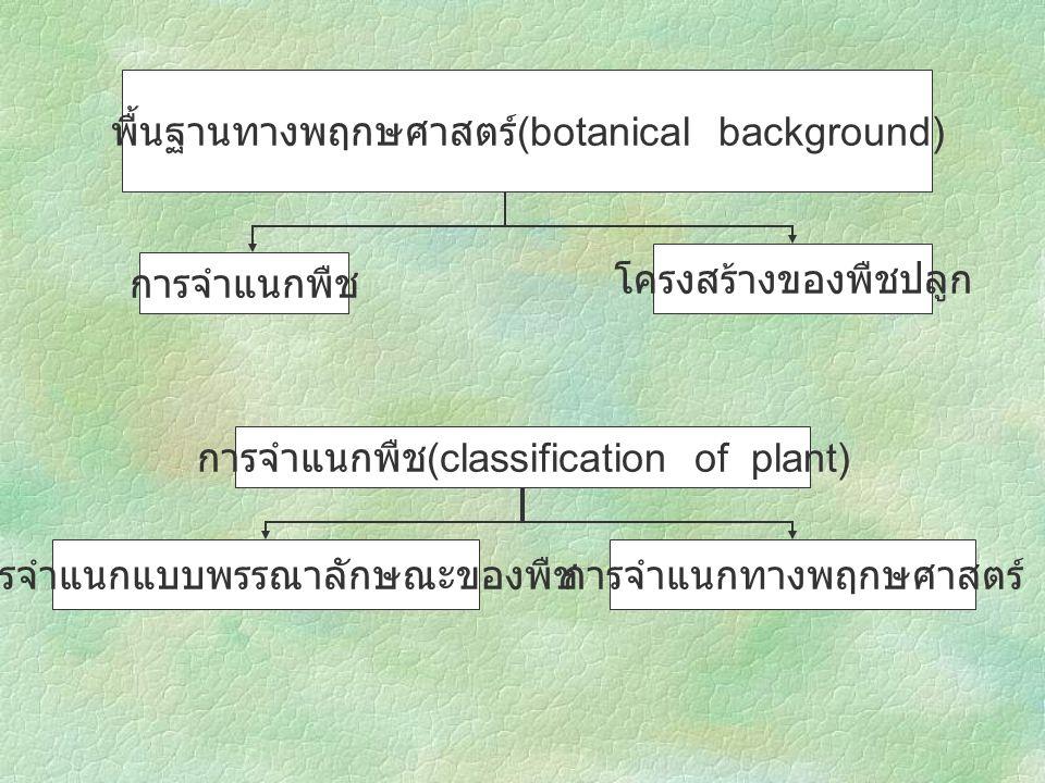 พื้นฐานทางพฤกษศาสตร์(botanical background)