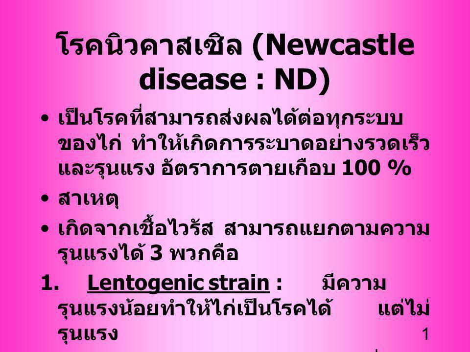 โรคนิวคาสเซิล (Newcastle disease : ND)