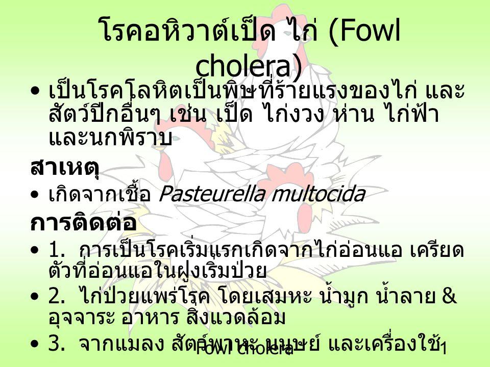 โรคอหิวาต์เป็ด ไก่ (Fowl cholera)