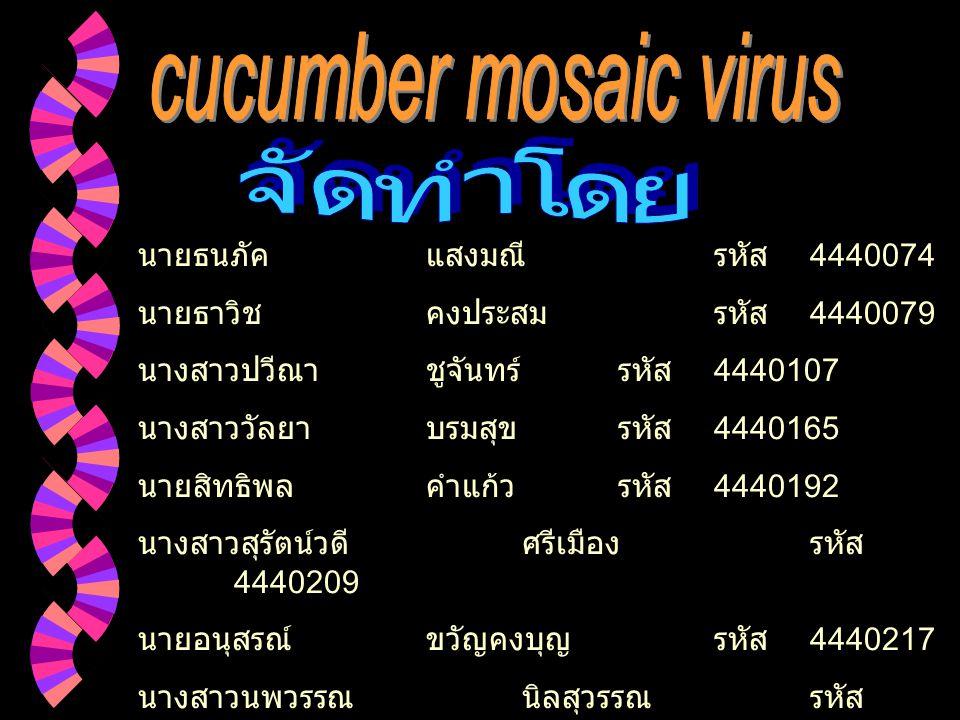จัดทำโดย cucumber mosaic virus นายธนภัค แสงมณี รหัส 4440074