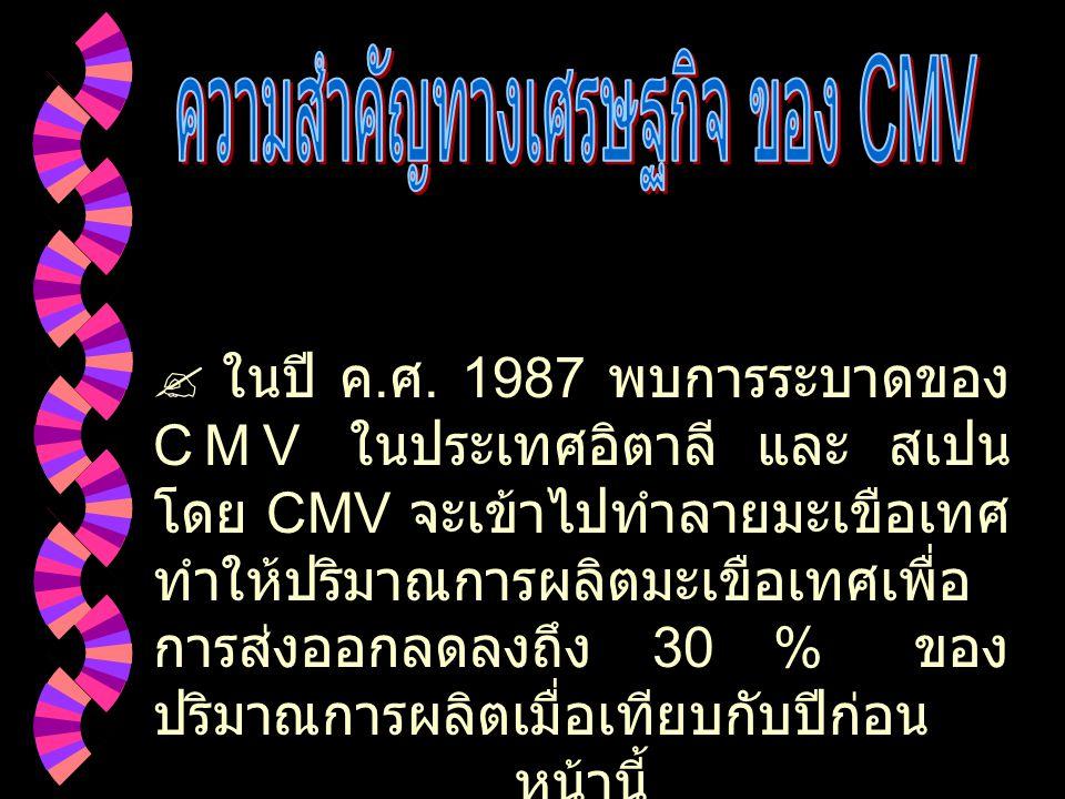 ความสำคัญทางเศรษฐกิจ ของ CMV