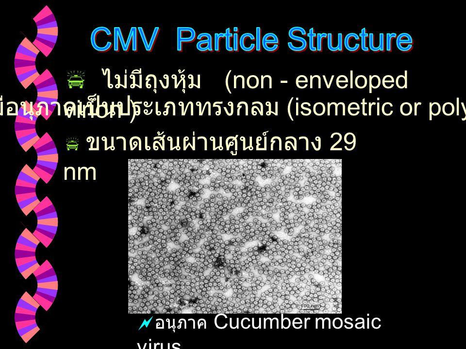 CMV Particle Structure