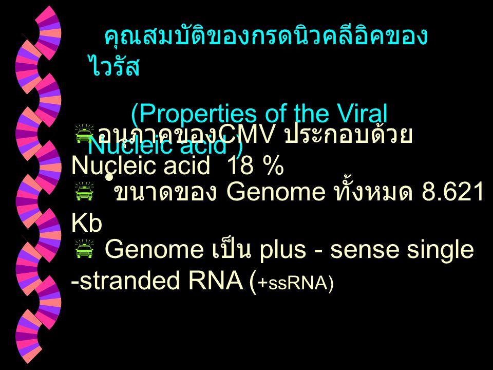 คุณสมบัติของกรดนิวคลีอิคของไวรัส