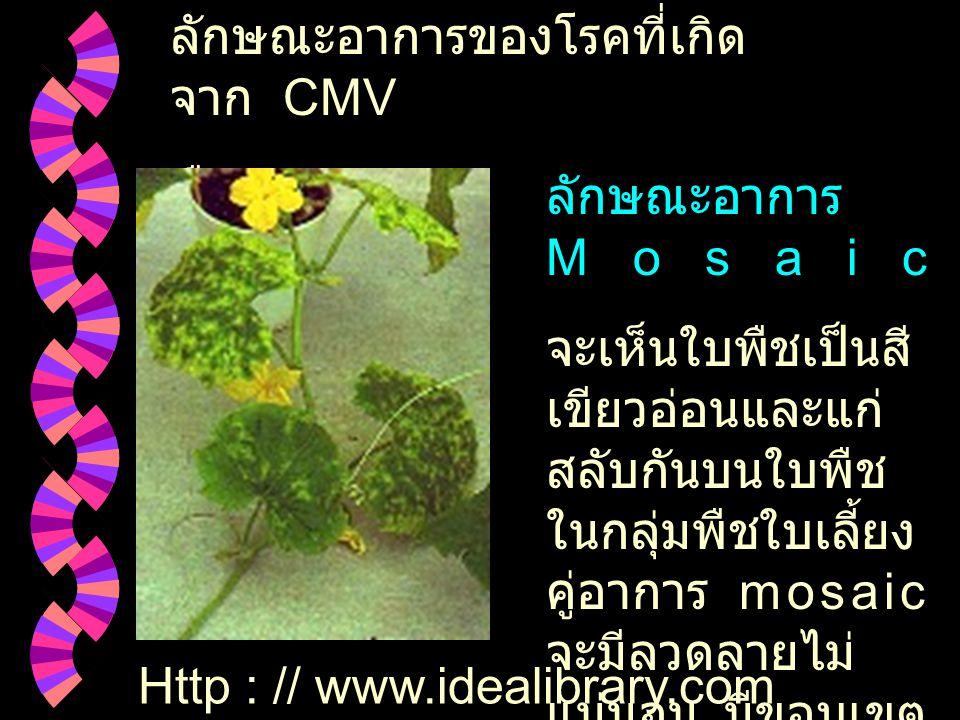 ลักษณะอาการของโรคที่เกิดจาก CMV