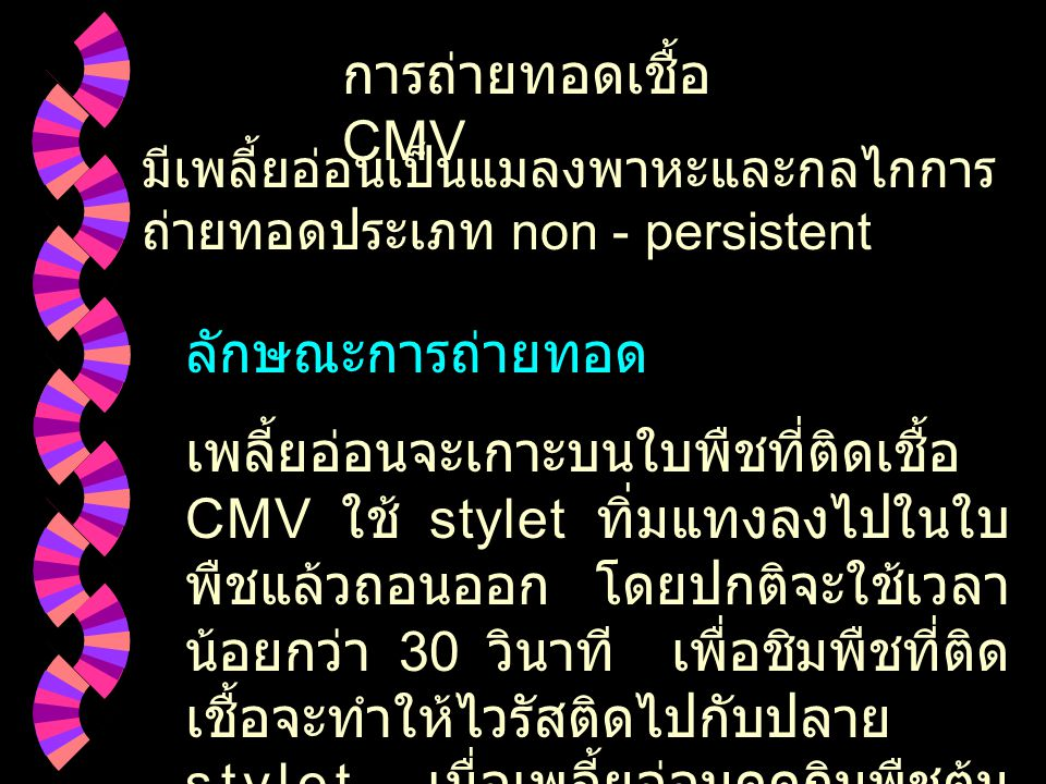 การถ่ายทอดเชื้อ CMV ลักษณะการถ่ายทอด