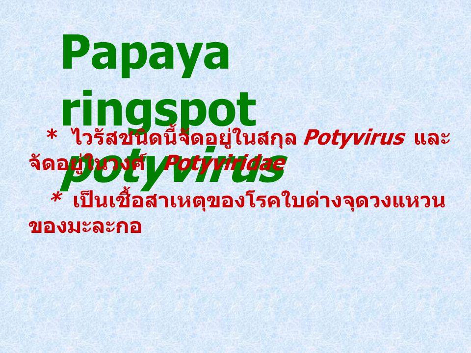 Papaya ringspot potyvirus
