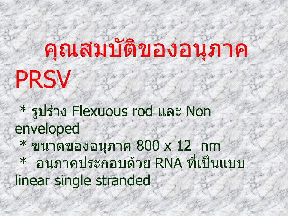 * รูปร่าง Flexuous rod และ Non enveloped * ขนาดของอนุภาค 800 x 12 nm