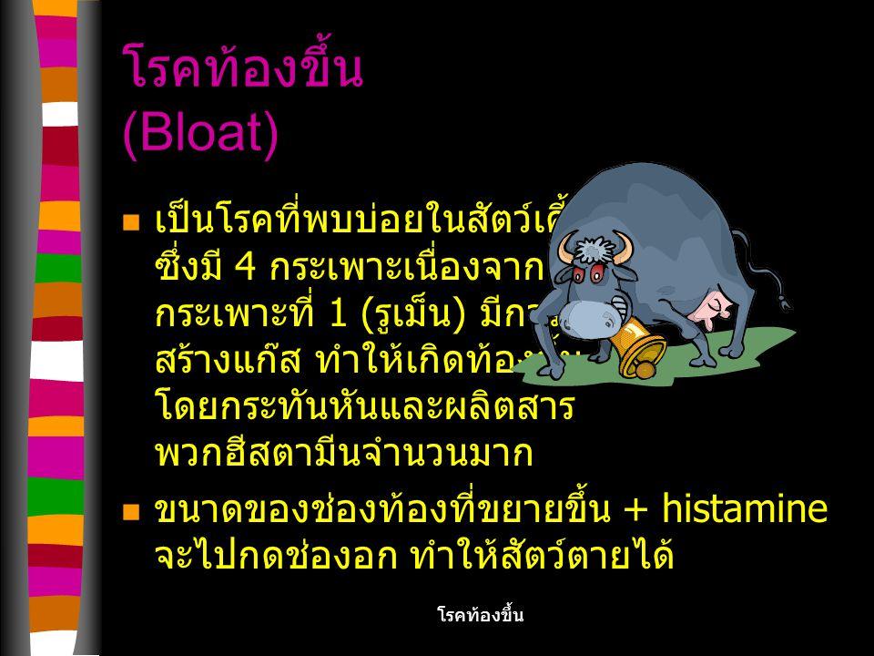 โรคท้องขึ้น (Bloat)