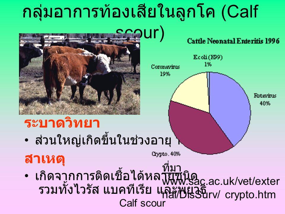 กลุ่มอาการท้องเสียในลูกโค (Calf scour)